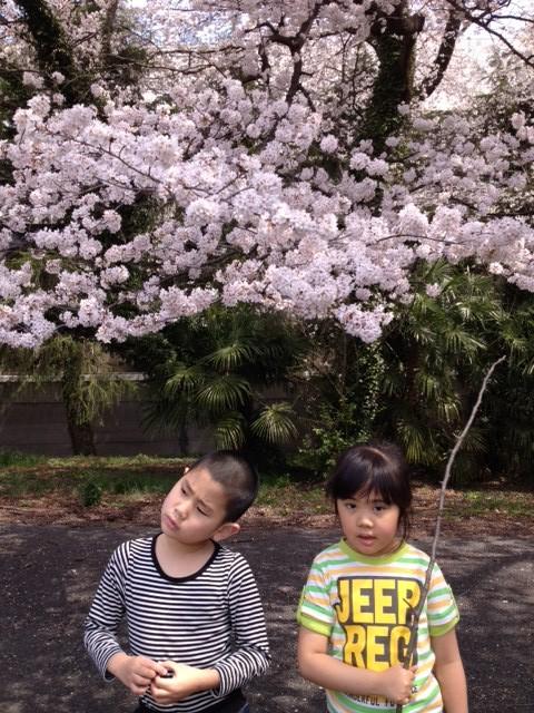 桜と豊紀と凛